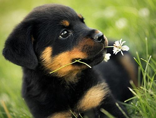 Για σκύλους